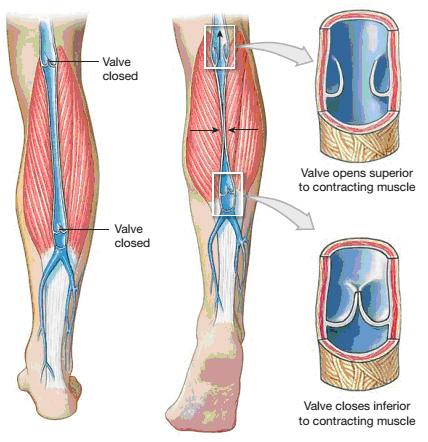 Các triệu chứng và nguyên nhân hình thành huyết khối tĩnh mạch sâu